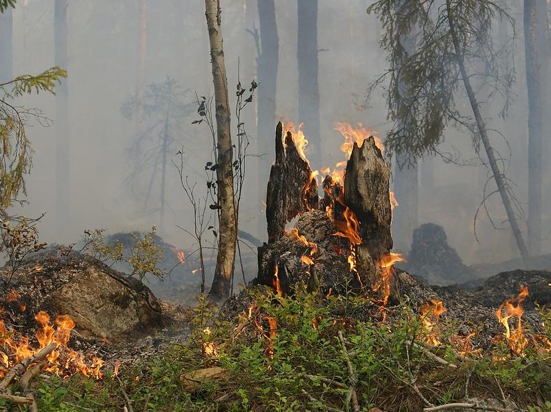 В Ульяновской области полыхают леса: четыре пожара за сутки на площади 17 гектаров