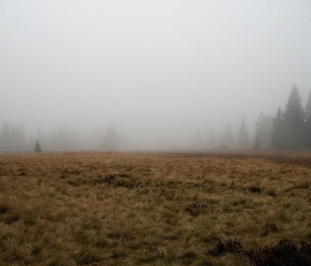 Выходные в Ульяновске будут дождливыми и туманными