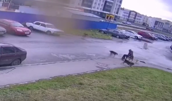 Друзья «вооружили» ульяновца, который отбил своего мопса от стаи бродячих собак
