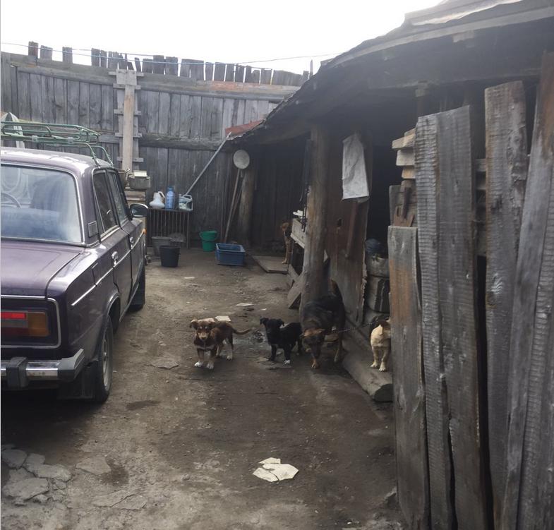 Житель деревни под Ульяновском содержит три десятка не привитых от бешенства собак, соседи жалуются