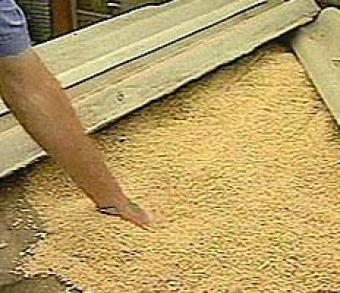 В Ульяновской области продолжают формировать региональный фонд зерна