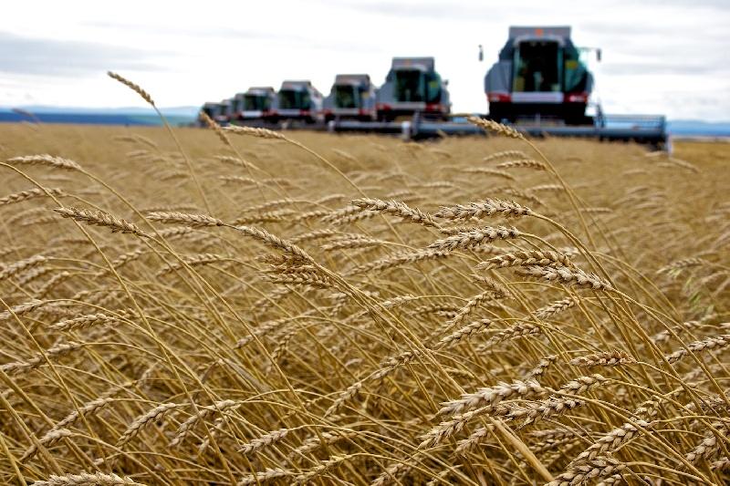 Аграрии Ульяновской области завершают уборку сельскохозяйственных культур