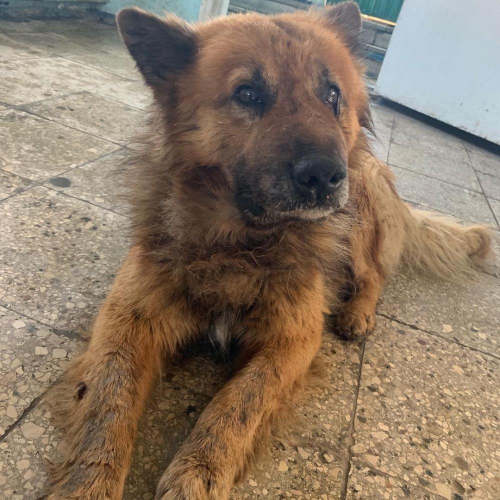 В Железнодорожном районе жестоко избили сторожевого пса (ВИДЕО)