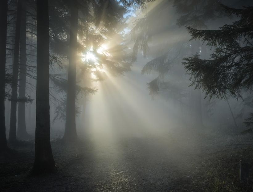 В Павловке две девочки пропали после фотосессии в лесу