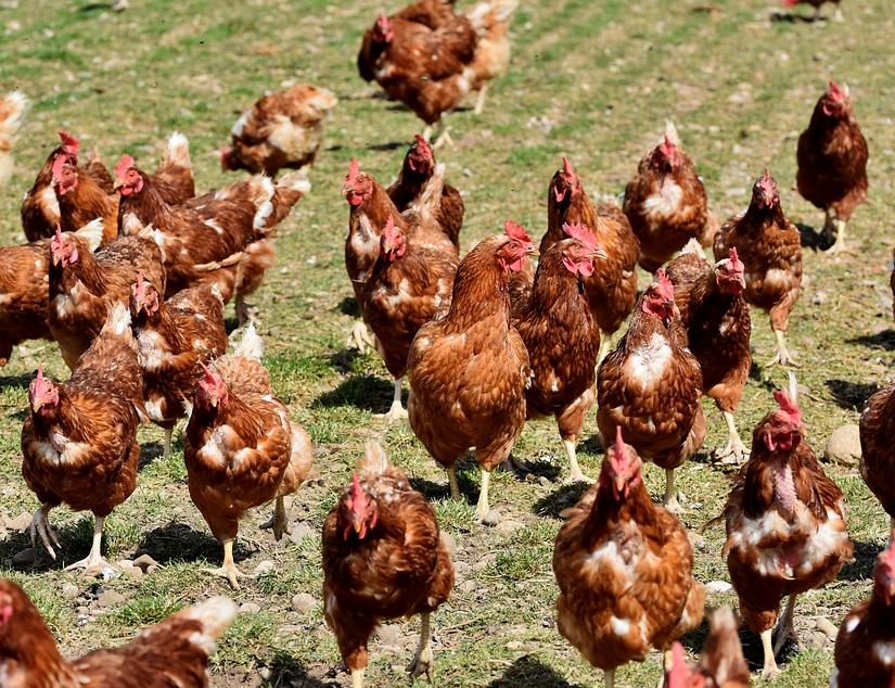 В Тереньгульском районе будут строить птицекомплекс