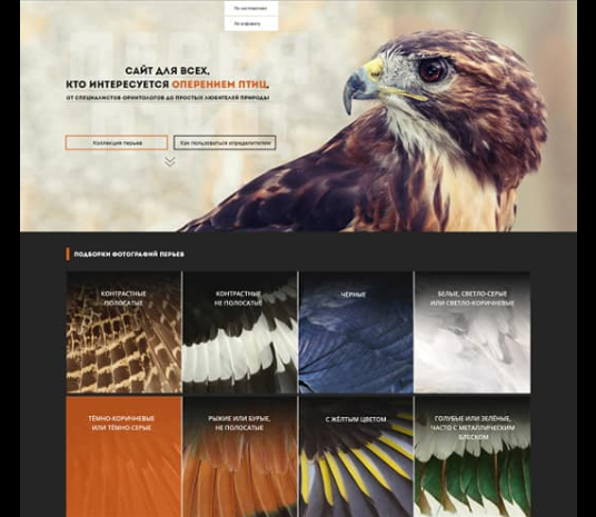 Ульяновский сайт о птичьих перьях стал лучшим российским музейным каталогом