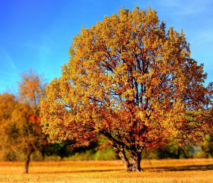 В Ульяновскую область постепенно возвращается тёплая погода