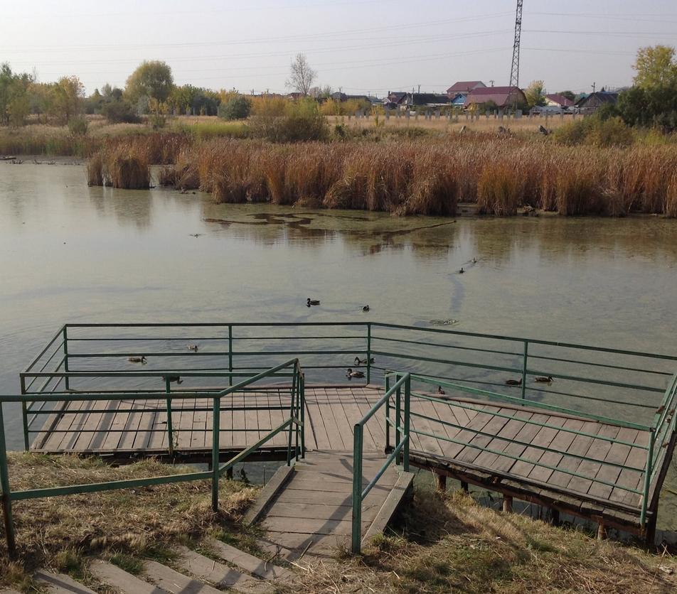 И садик построят, и «пруд с уточками» не тронут: власти и жители Ульяновска пришли к компромиссу