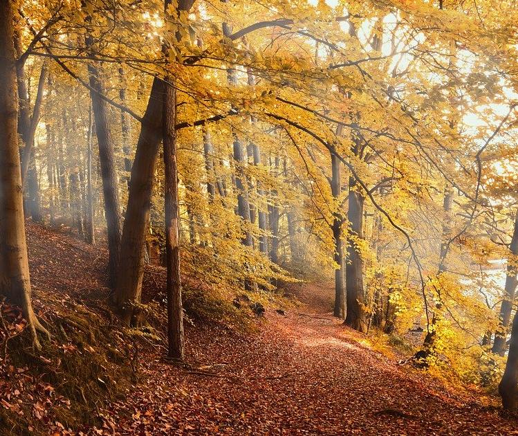 Ночью минусовая температура, днем плюс 23: погода в Ульяновской области 2 октября